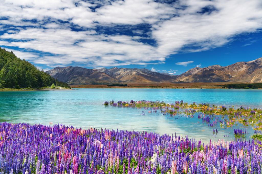 DU LỊCH ĐẢO NAM NEW ZEALAND (QUEENSTOWN – MOUNT COOK – TWIZEL – CHRISTCHURCH)